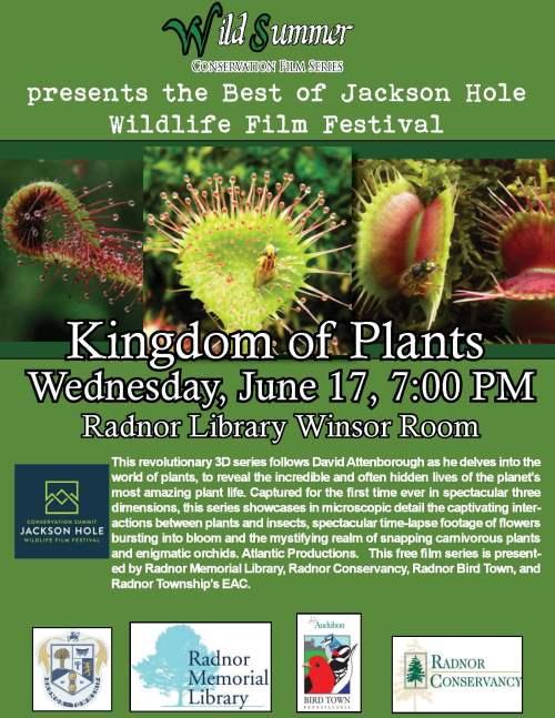 Wild Summer Kingdom of Plants