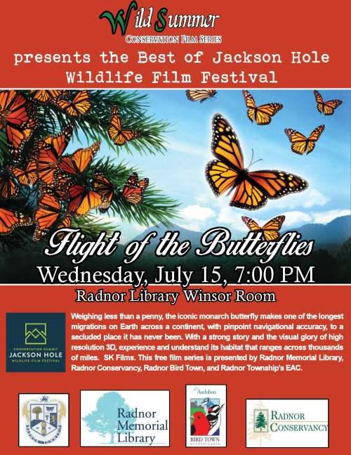 Wild Summer Butterflies