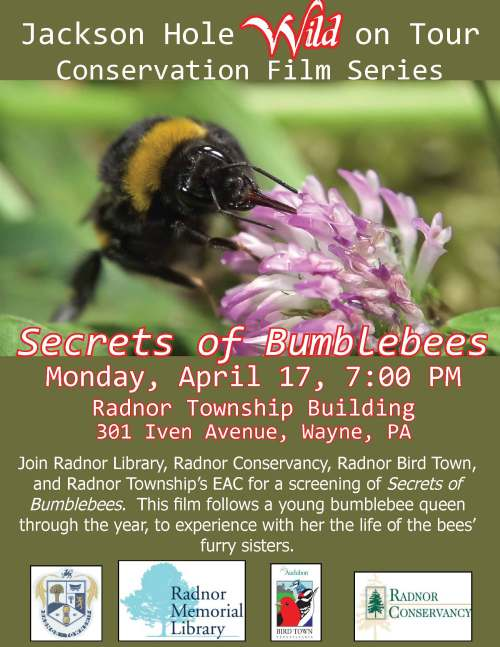 Secrets of Bumblebees