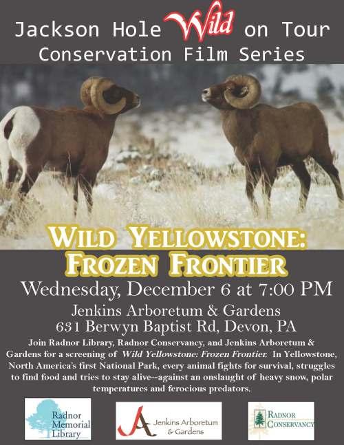 Wild Yellowstone (1)